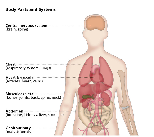 Body parts and systems